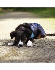 Back on Track derka chłodząca dla psa Cool on Track