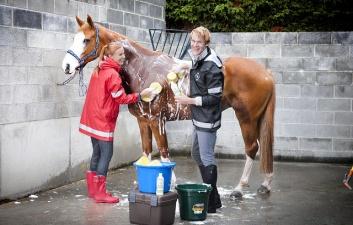 Pielęgnacja konia - szampony